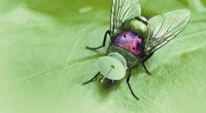 Insect Spy